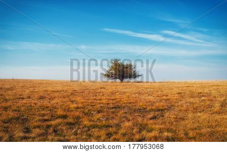 Lonely Tree On Yellow Meadow An Mountain Landscape With Clouds.