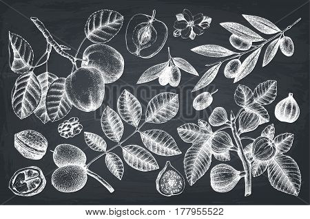 Vintage set of trees branches sketch. Botanical garden drawing.