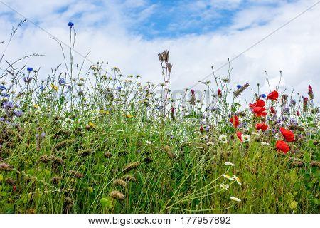 Beautiful Flowering Spring Meadow