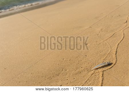 Small single transparent fish washed ashore on a golden sand beach.