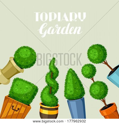 Boxwood topiary garden plants. Decorative trees in flowerpots.