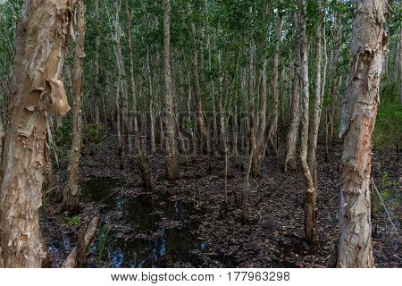 Dense Flooded Mangrove Forest.