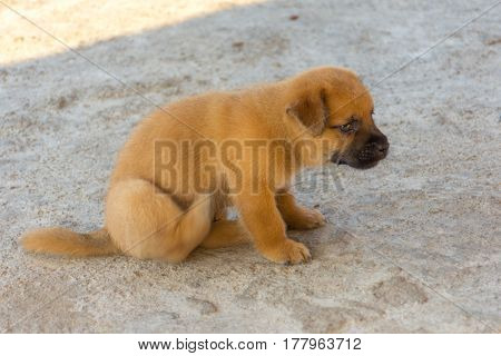 Cute golden puppy lightly scratching sat on concrete floor with motion blur.