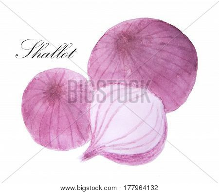Watercolor painting of Shallot on white background