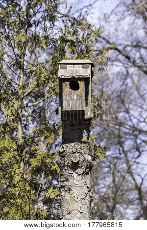 Rustic Homemade Birdhouse On Top Of A Tall Tree Stump, Pine Tree In Background