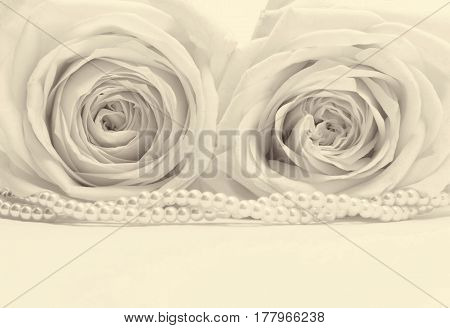Beautiful white roses toned in sepia can use as wedding background. Soft focus. Retro stylev
