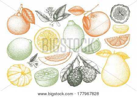 Vintage Ink hand drawn collection of citrus fruits sketch. Vector illustration of highly detailed citrus fruits in pastel colors