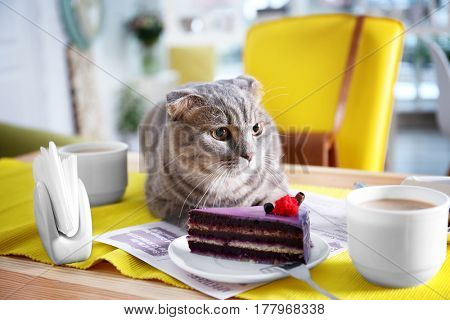 Cute cat lying on table with dessert and cup of coffee