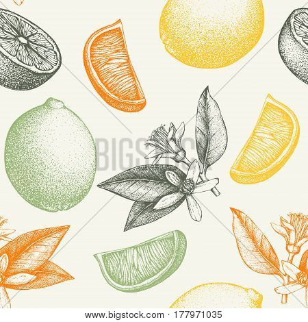 Ink hand drawn lime background. Vector seamless patern with highly detailed citrus fruits