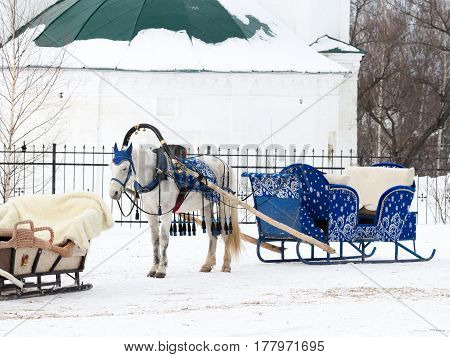 Suzdal -13 February 2017: A harnessed white horse with blue sledges stands outside in the winter on February 13 2017 Suzdal Vladimir Region Russia