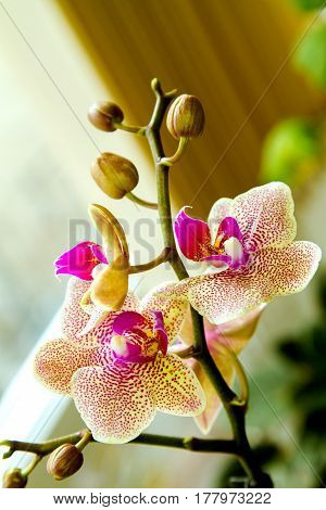 Image Beautiful House Flower Spotted Orchid
