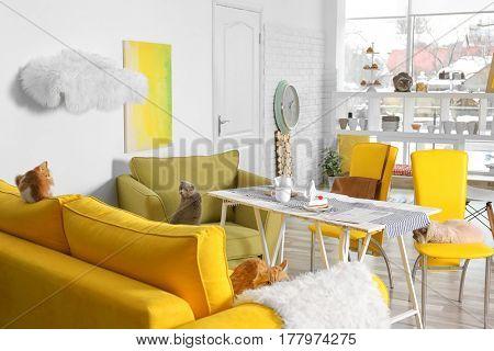 Beautiful interior of modern cat cafe