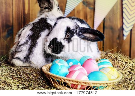 Two fluffy easter bunny sitting on a hay close to painted eggs. Rural style, easter decoration.