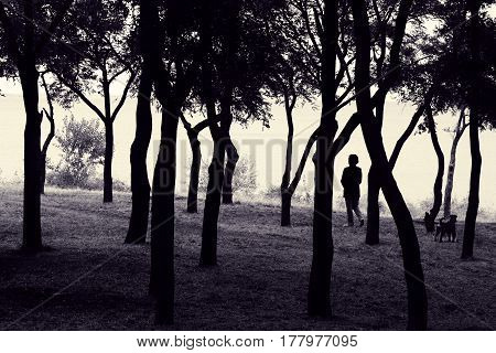 Woman with dog. Silhouette of lady with pet in twisty trees. Walking with animal in nature. Toned black and white photo