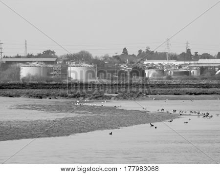 Some waterfowl resting and eating on the edge of a lake with an industrial backdrop