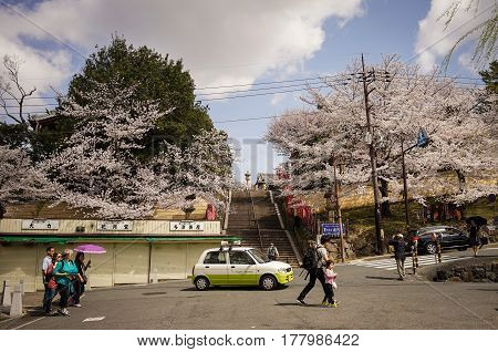 People Walking On Street In Cherry Blossom Season