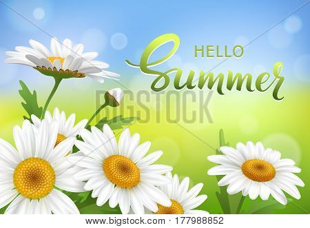 Summer meadow with realistic daisy, camomile flowers on transparent background.