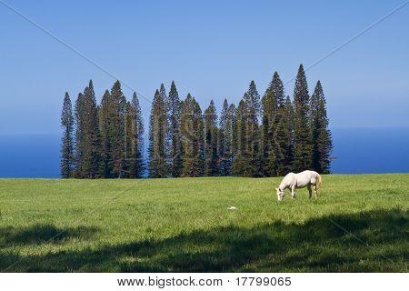 Single Horse on Open Land