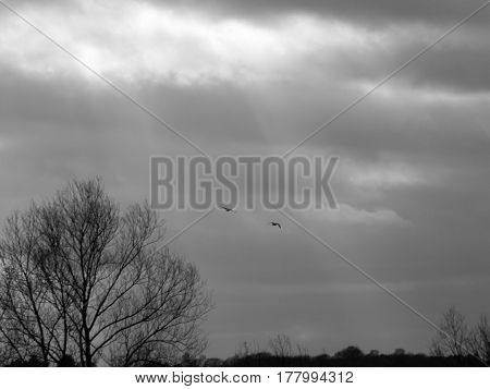 Some light darting down through the overcast sky with two birds flying on by