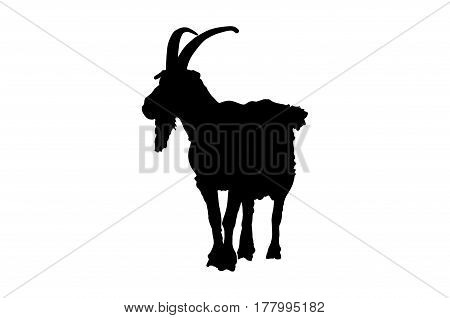 the figure of the black goat isolated on white background