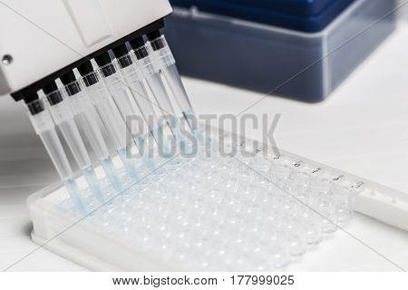 Pipette depositing samples into a 96 well micro-plate. Laboratory, research, analysis. Close-up