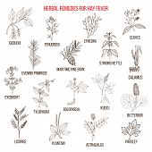 Best herbal remedies for hay fever. Hand drawn vector set of medicinal plants poster