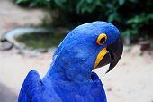 a detailed image of a macaws head poster
