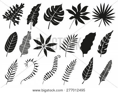 Palm Leaf Silhouette. Monstera Frond, Plant Leaves Silhouettes And Tropical Palms Fronds Isolated Ve