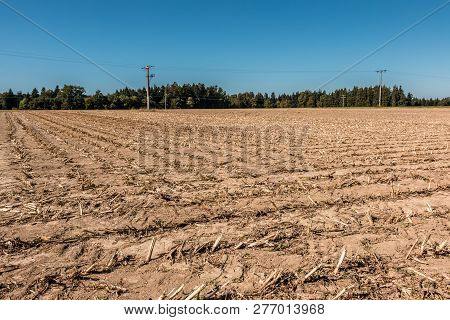 Big Empty Corn Field With Little Forest