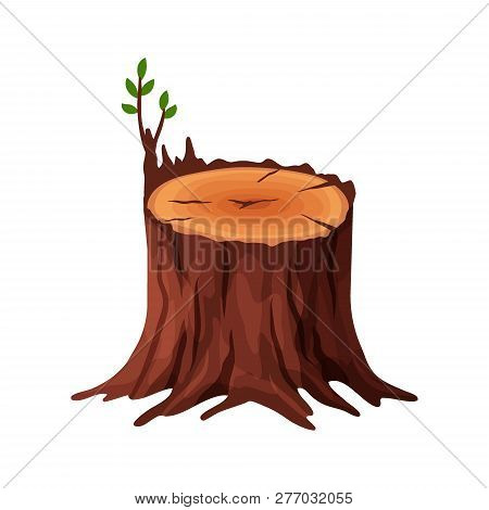 Cartoon Old Tree Stump With Cracks And Roots Isolated On White Background. Tree Stump Vector Illustr