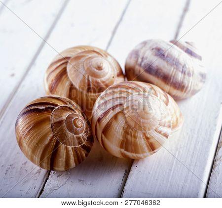 Seashells Over White Wooden Table