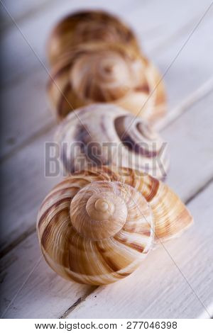Shells In A Row Over White Table