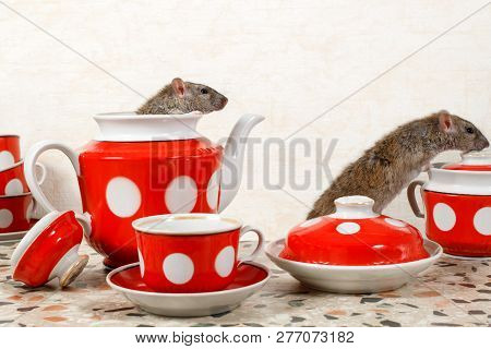 Closeup Two Rats (rattus Norvegicus) And  Red Tea Set On Countertop At Kitchen In An Apartment House