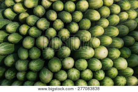 Green Fresh Cucumbers Pattern Texture Background. Fitness Diet Detox Concept. Green Cucumbers Harves