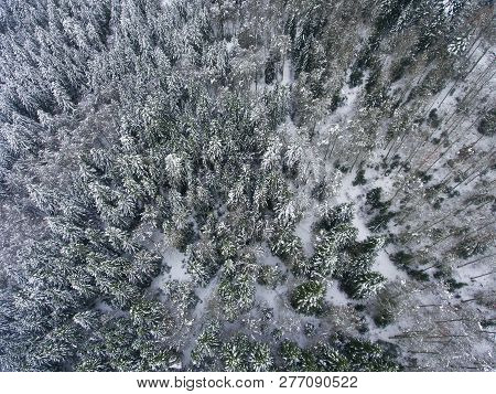 View Of The Snowed Trees In Somport, Huesca, Spain