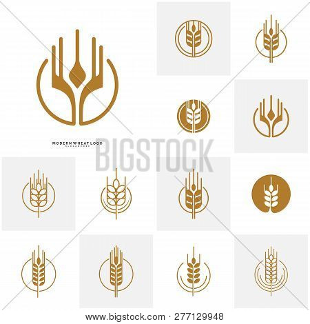 Set Of Wheat Luxury Grain And Bread Labels. Nature Wheat. Agriculture Wheat Logo Template Vector