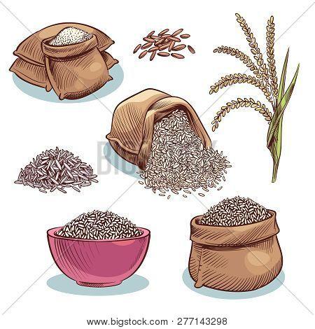 Rice Sacks. Bowl With Rice Grains And Ears. Japanese Food, Rice Storage Cartoon Vector Set. Illustra