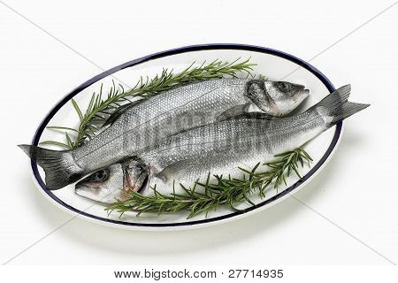 wild sea bass on plate
