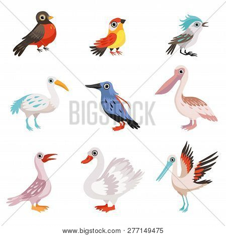 Collection Of Beautiful Birds, Crane, Stork, Swan, Kingfisher, Pelican, Robin, Finch, Blue Jay Birds