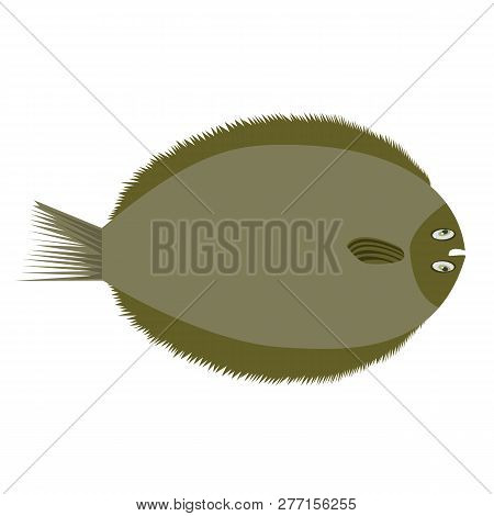 Brill, European Flat Fish. Flat Color Style Vector Illustration.