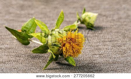 The Flower And Bud Safflower Lies On The Background Of The Fabric As A Burlap Of Gray. Selective Foc