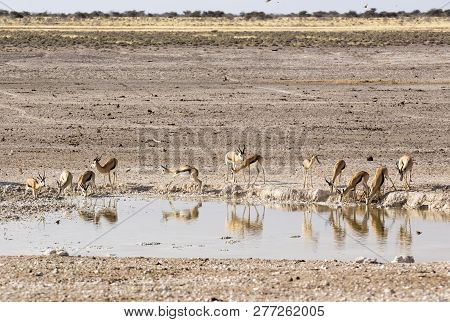Animals Arriving At Water Hole In Desert Of Namibia