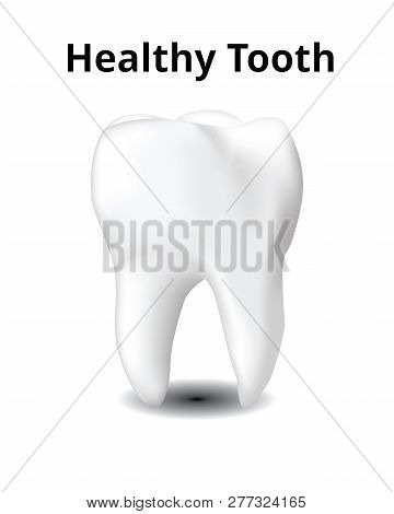 Healthy Tooth Isolated On White Background, Realistic Design Illustration Vector.