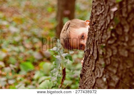 The Thrill Is In The Discovery. Small Boy Play Hide And Seek. Small Boy Enjoy Playing Outdoor. Its A