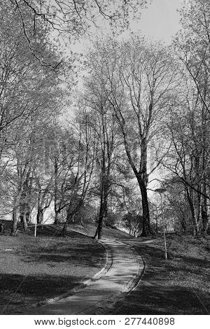 Paved Path Leads Uphill Through Trees