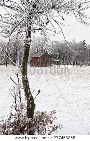 Red Barn And Tree In Rime Frost - Minnesota, Usa