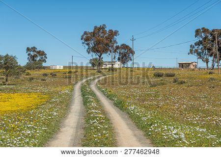 Nieuwoudtsville, South Africa, August 29, 2018: A Two-spoor Track In A Field Of Wildflowers At The H