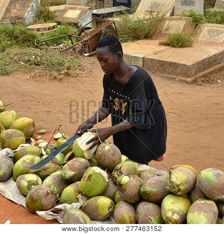 Boy Cutting A Coconut With A Big African Knife. Sale Of Coconuts. African Street Market. Typical Lif