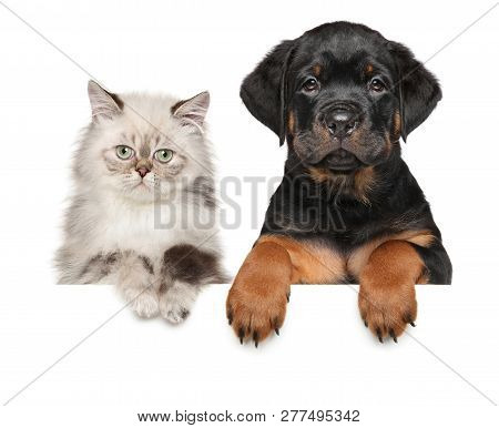 Kitten And Puppy Above Banner, Isolated On White Background