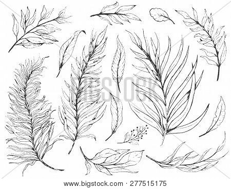 Sketch Set Plant Leaves, Drawing Nature Set. Graphic Floral Botanical Line Painted Herb.